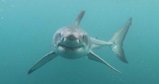 Shark Bites Kingwood